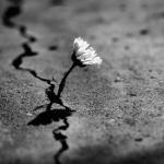 A vida – A dor e o sofrimento